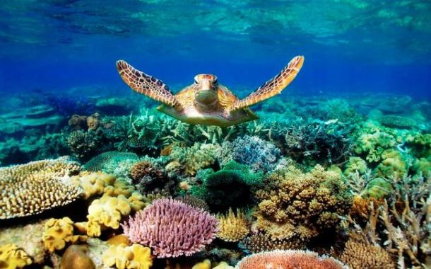 great-barrier-reef-04.jpg